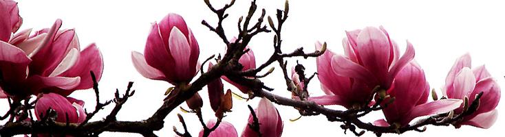 Bloemenparfums